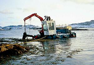Récolte de l'algue en Norvège