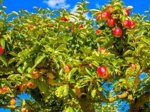 ultralg_fruits_1