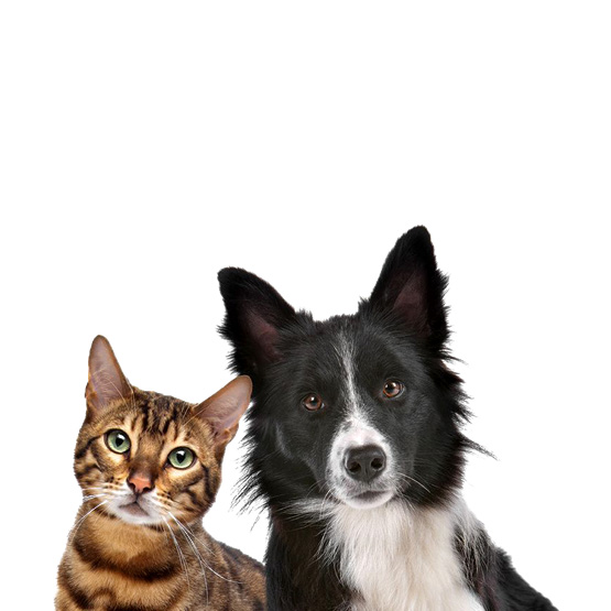 Anilife Chiens et Chats